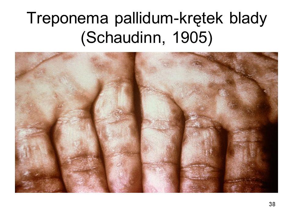 38 Treponema pallidum-krętek blady (Schaudinn, 1905)