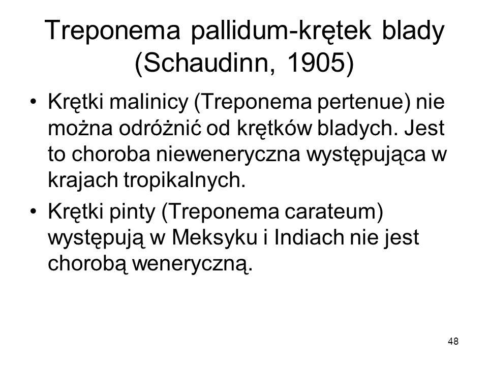 48 Treponema pallidum-krętek blady (Schaudinn, 1905) Krętki malinicy (Treponema pertenue) nie można odróżnić od krętków bladych. Jest to choroba niewe