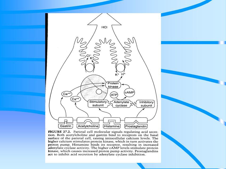 Patogeneza Podwyższone podstawowe i stymulowane wydzielanie HCl (40% pacjentów z DU) Zwiększona liczba komórek okładzinowych+wzrost wrażliwości na gastrynę Zaburzenia perystaltyki