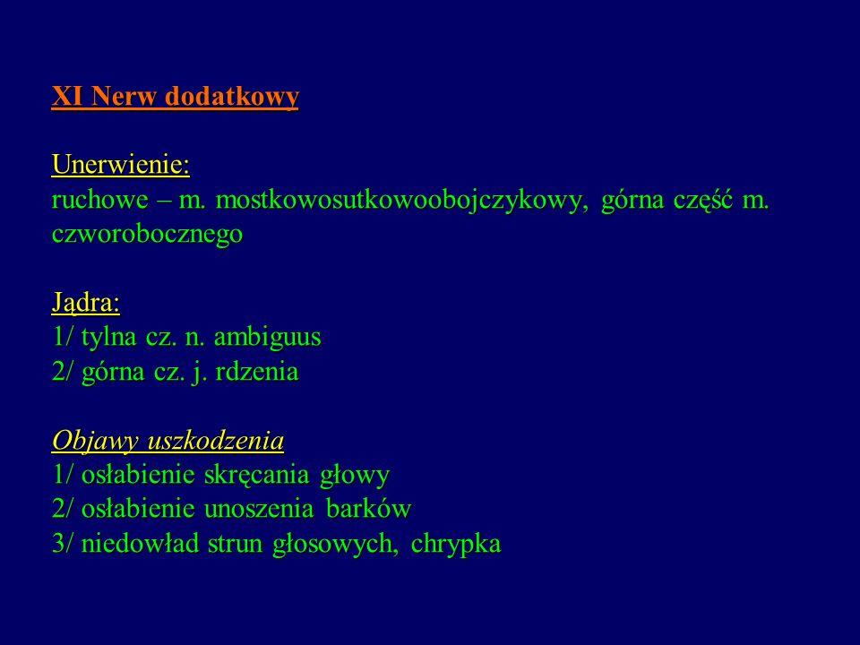 XI Nerw dodatkowy Unerwienie: ruchowe – m. mostkowosutkowoobojczykowy, górna część m. czworobocznego Jądra: 1/ tylna cz. n. ambiguus 2/ górna cz. j. r