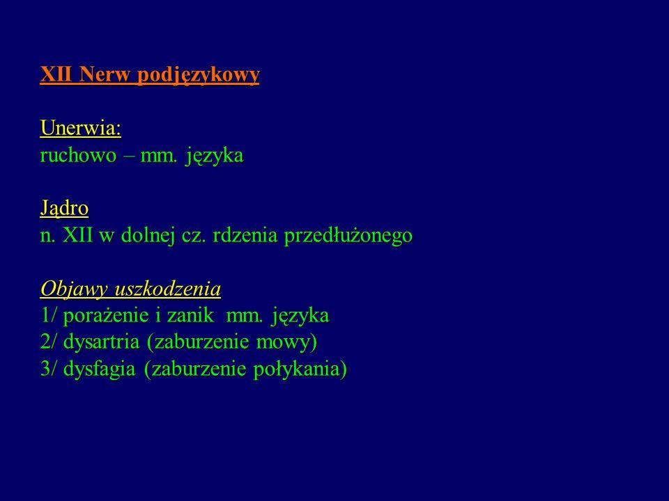 XII Nerw podjęzykowy Unerwia: ruchowo – mm. języka Jądro n. XII w dolnej cz. rdzenia przedłużonego Objawy uszkodzenia 1/ porażenie i zanik mm. języka