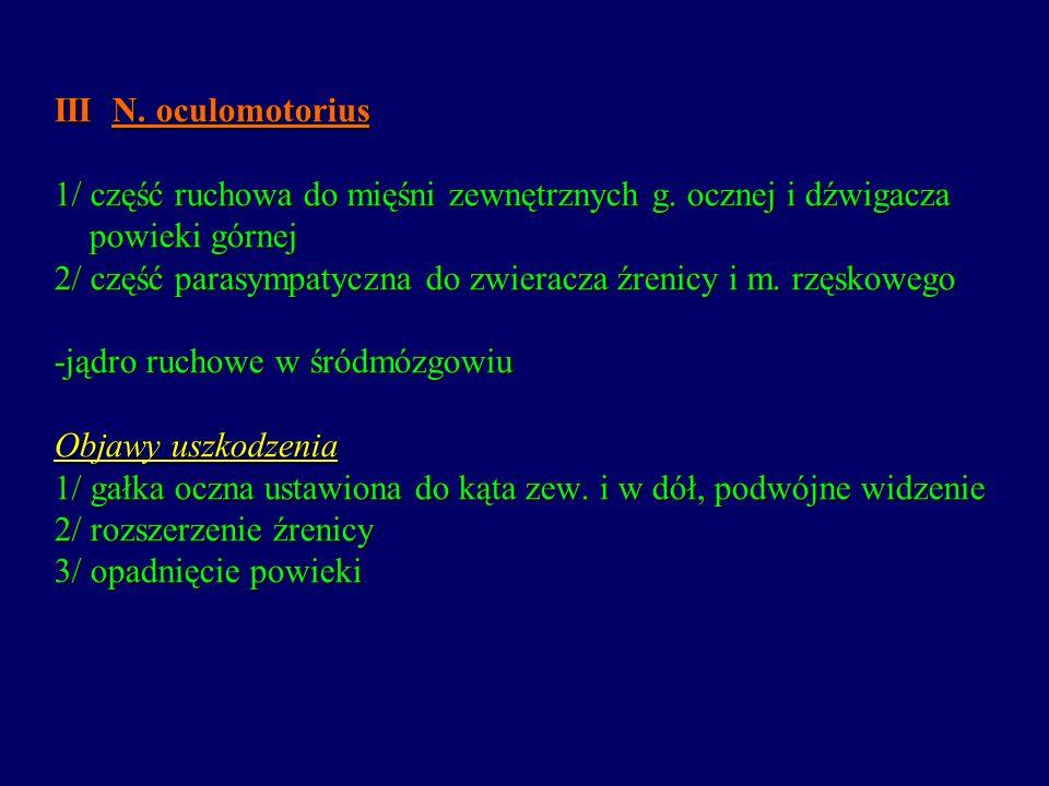III N. oculomotorius 1/ część ruchowa do mięśni zewnętrznych g. ocznej i dźwigacza powieki górnej 2/ część parasympatyczna do zwieracza źrenicy i m. r