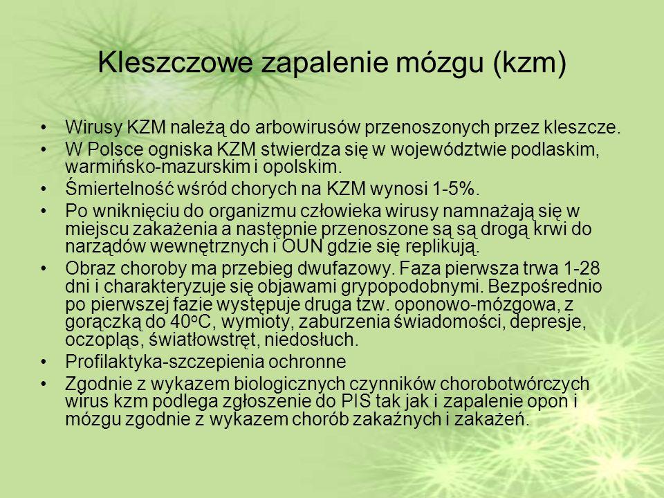 Kleszczowe zapalenie mózgu (kzm) Wirusy KZM należą do arbowirusów przenoszonych przez kleszcze.