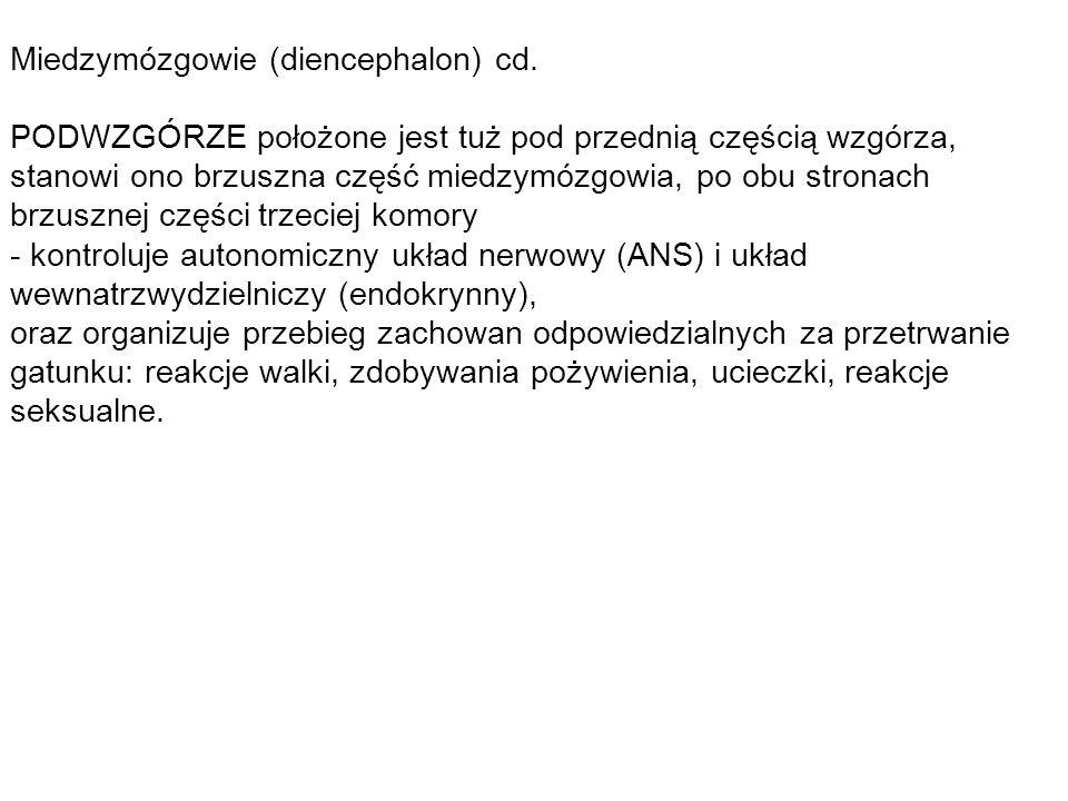 Miedzymózgowie (diencephalon) cd.