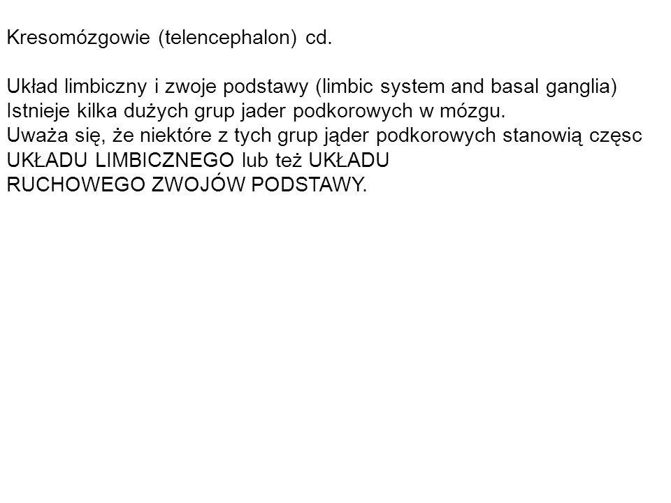 Kresomózgowie (telencephalon) cd.
