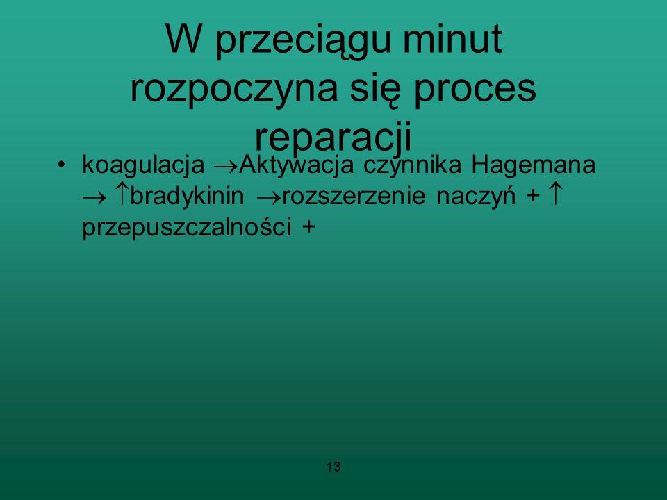 13 W przeciągu minut rozpoczyna się proces reparacji koagulacja Aktywacja czynnika Hagemana bradykinin rozszerzenie naczyń + przepuszczalności +