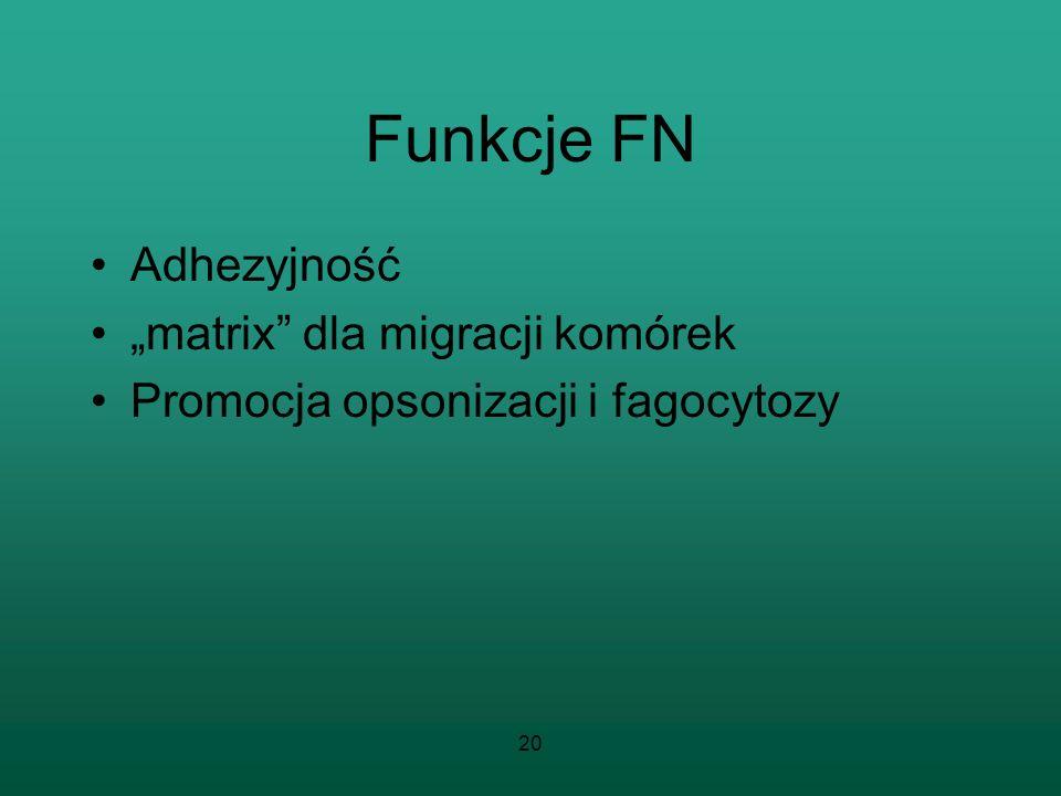 20 Funkcje FN Adhezyjność matrix dla migracji komórek Promocja opsonizacji i fagocytozy