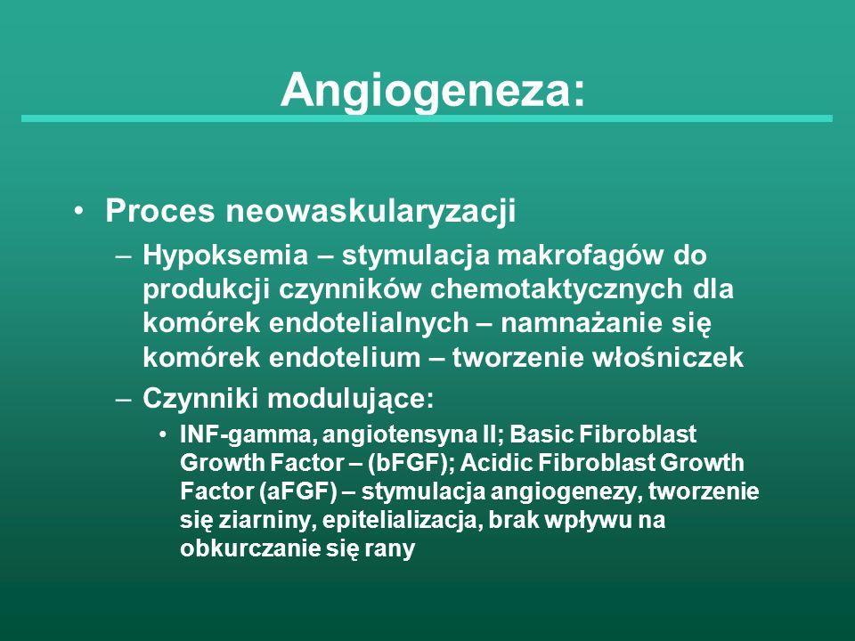 Angiogeneza: Proces neowaskularyzacji –Hypoksemia – stymulacja makrofagów do produkcji czynników chemotaktycznych dla komórek endotelialnych – namnaża