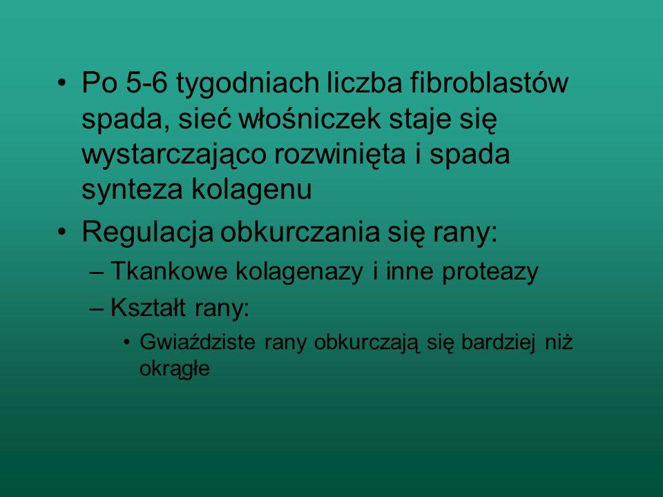 Po 5-6 tygodniach liczba fibroblastów spada, sieć włośniczek staje się wystarczająco rozwinięta i spada synteza kolagenu Regulacja obkurczania się ran