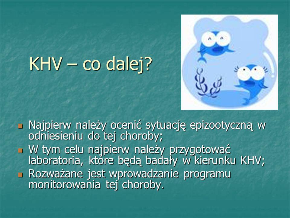 KHV – co dalej? Najpierw należy ocenić sytuację epizootyczną w odniesieniu do tej choroby; Najpierw należy ocenić sytuację epizootyczną w odniesieniu