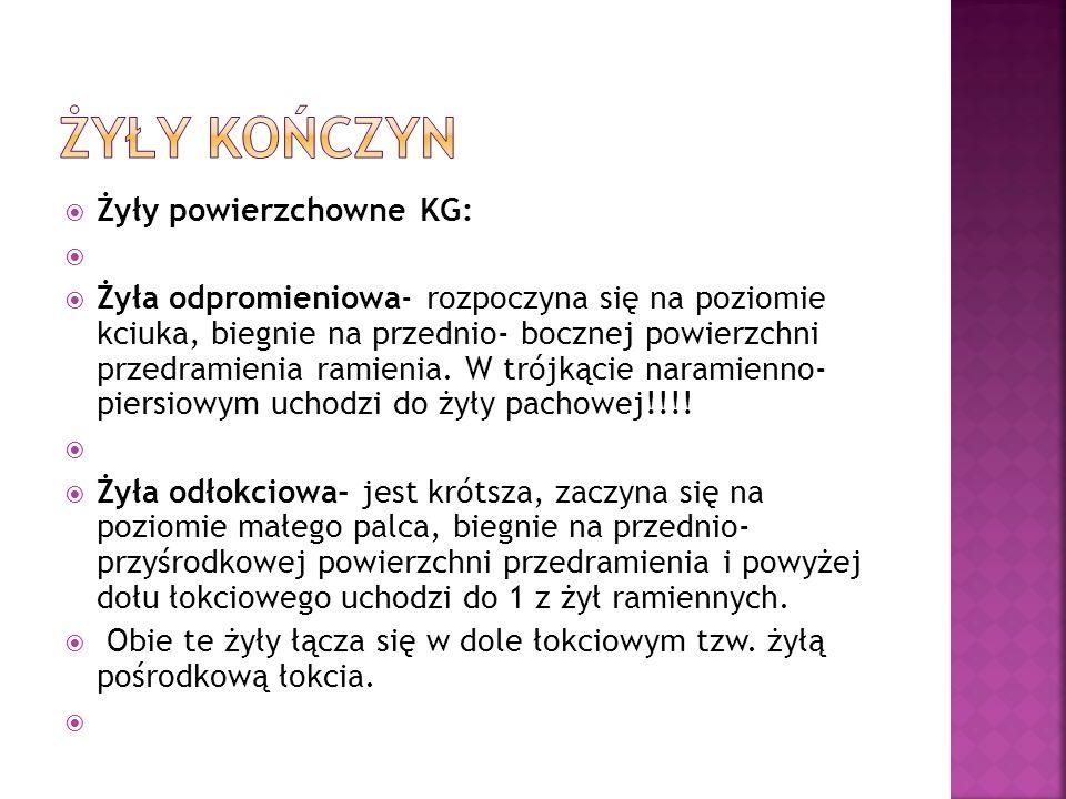 Żyły powierzchowne KG: Żyła odpromieniowa- rozpoczyna się na poziomie kciuka, biegnie na przednio- bocznej powierzchni przedramienia ramienia. W trójk