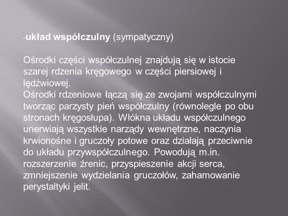 - układ współczulny (sympatyczny) Ośrodki części współczulnej znajdują się w istocie szarej rdzenia kręgowego w części piersiowej i lędźwiowej. Ośrodk