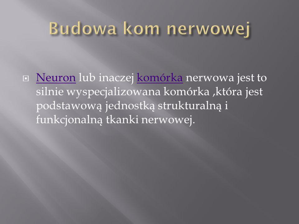 Neuron lub inaczej komórka nerwowa jest to silnie wyspecjalizowana komórka,która jest podstawową jednostką strukturalną i funkcjonalną tkanki nerwowej