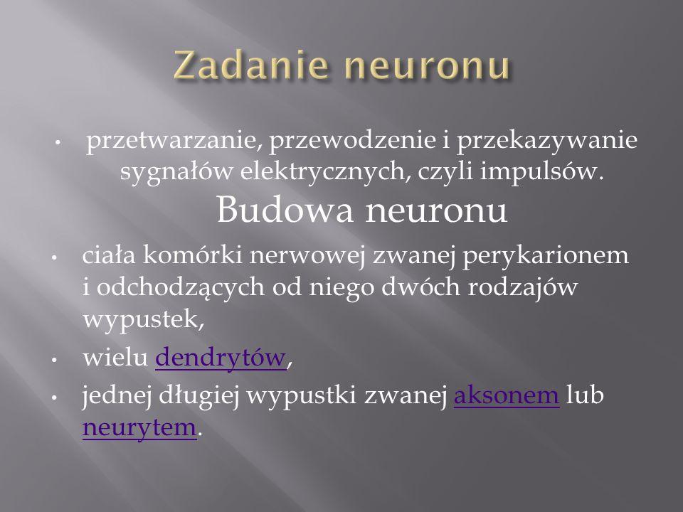 przetwarzanie, przewodzenie i przekazywanie sygnałów elektrycznych, czyli impulsów. Budowa neuronu ciała komórki nerwowej zwanej perykarionem i odchod