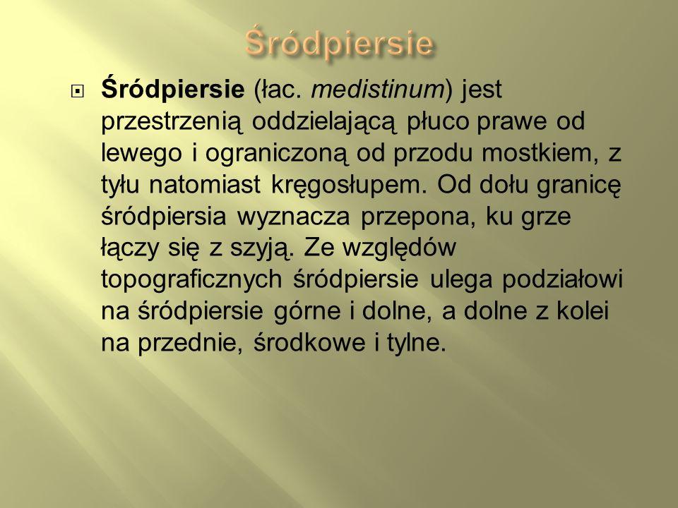 Śródpiersie (łac. medistinum) jest przestrzenią oddzielającą płuco prawe od lewego i ograniczoną od przodu mostkiem, z tyłu natomiast kręgosłupem. Od