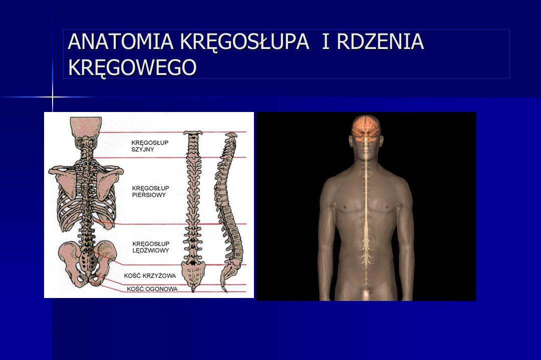 ANATOMIA KRĘGOSŁUPA Krąg Rdzeń kręgowy Wyrostek poprzeczny Wyrostek kolczysty