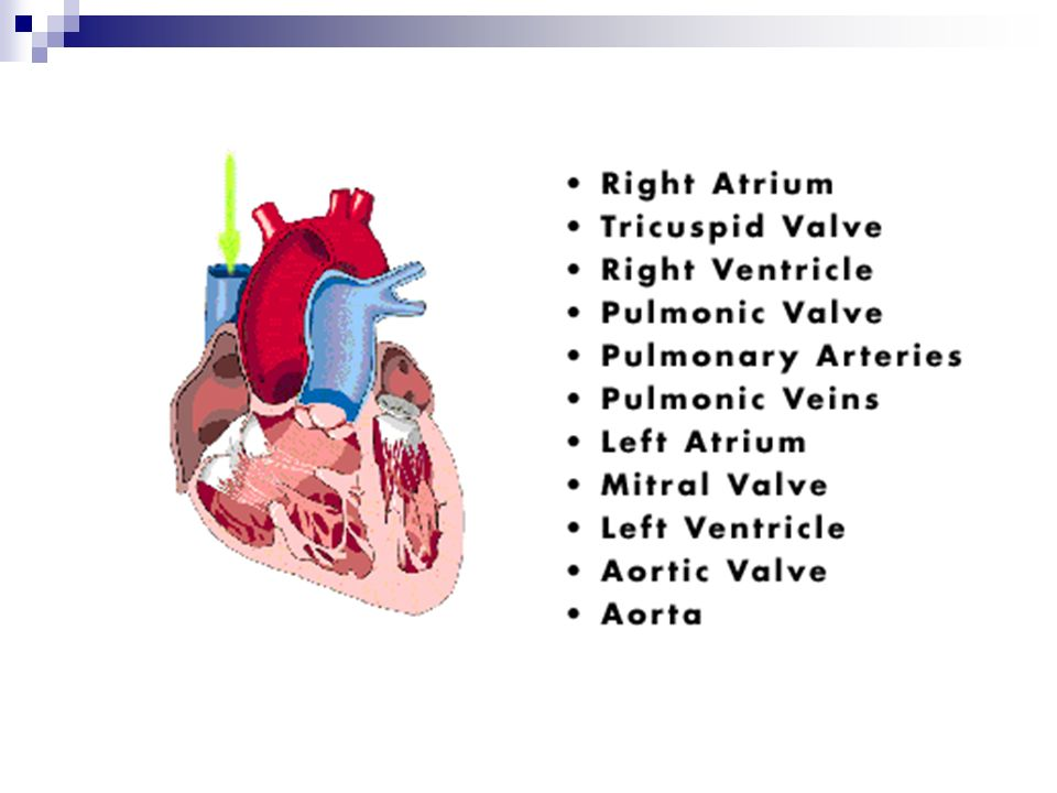 VF/VT bez tętna – leki: Lidokaina 1mg/kg, Jeśli Amiodaron jest niedostępny, Nie podawać po wcześniejszym zastosowaniu amiodaronu, Magnez 4 ml 50% MgSO 4 – 2g – 8 mmol *, W opornym na leczenie VF (podejrzenie hipomagnezemii), * 10 ml 20% MgSO 4
