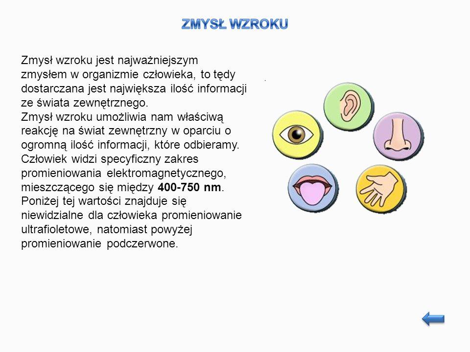Zmysł wzroku jest najważniejszym zmysłem w organizmie człowieka, to tędy dostarczana jest największa ilość informacji ze świata zewnętrznego.