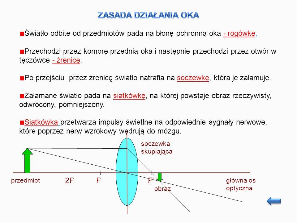 Układ optyczny oka można porównać z układem aparatu fotograficznego, przy czym rolę soczewek obiektywu spełniają rogówka i soczewka oka, rolę przysłony - tęczówka, a warstwy światłoczułej kliszy - siatkówka.