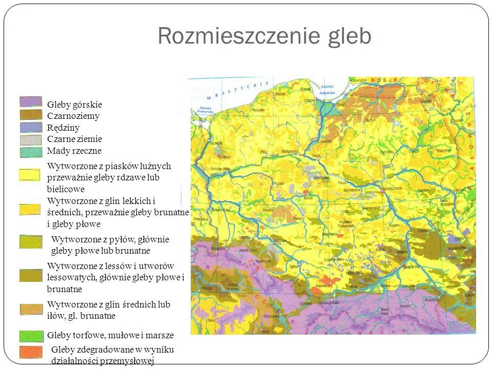 Rozmieszczenie gleb Gleby górskie Czarnoziemy Rędziny Czarne ziemie Mady rzeczne Wytworzone z piasków luźnych przeważnie gleby rdzawe lub bielicowe Wy