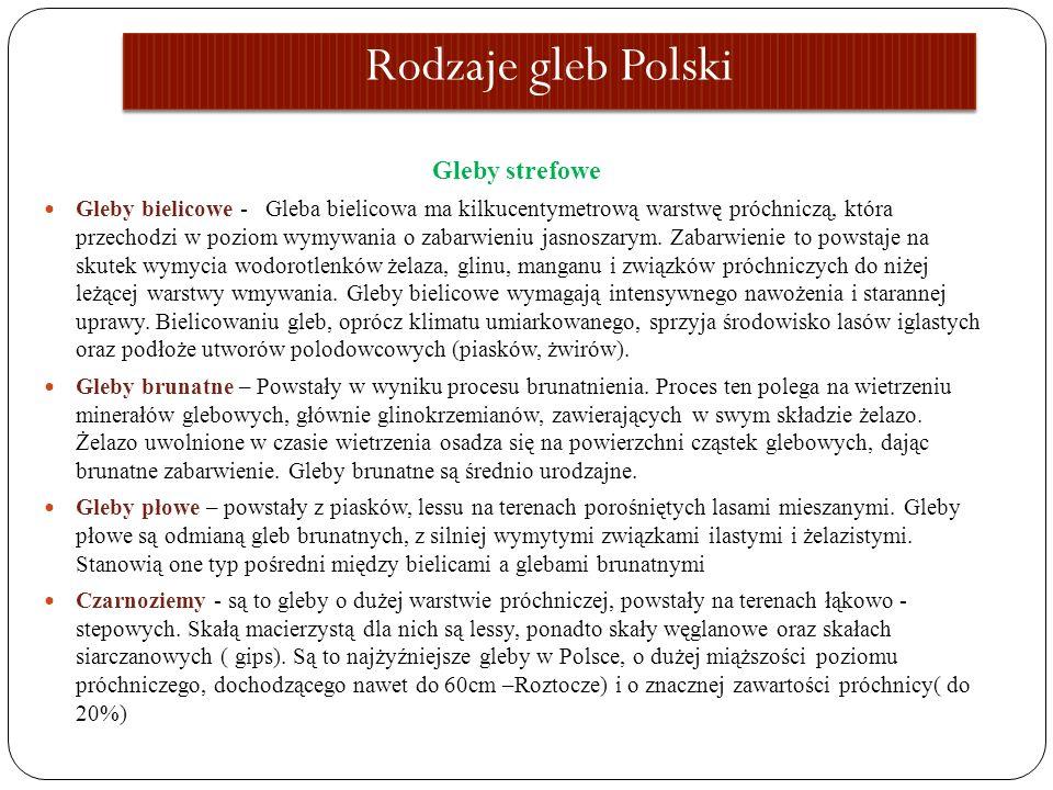 Rodzaje gleb Polski Gleby strefowe Gleby bielicowe - Gleba bielicowa ma kilkucentymetrową warstwę próchniczą, która przechodzi w poziom wymywania o za