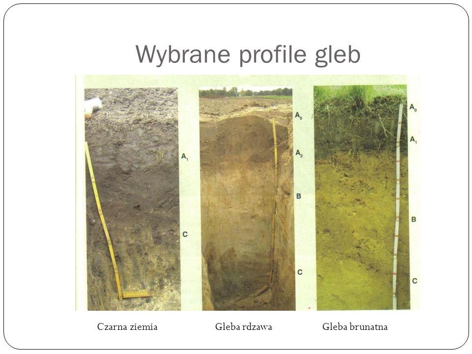 Wybrane profile gleb Gleba brunatnaCzarna ziemiaGleba rdzawa