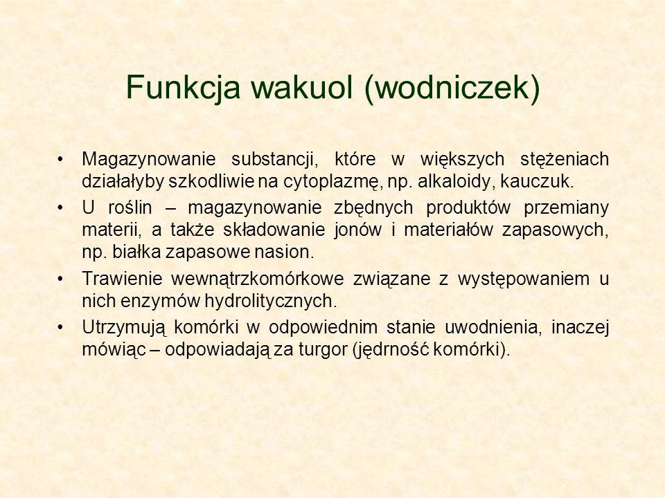 Funkcja wakuol (wodniczek) Magazynowanie substancji, które w większych stężeniach działałyby szkodliwie na cytoplazmę, np. alkaloidy, kauczuk. U rośli