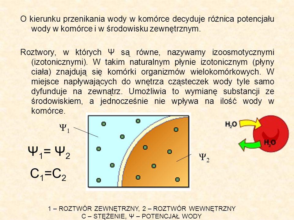 O kierunku przenikania wody w komórce decyduje różnica potencjału wody w komórce i w środowisku zewnętrznym. Roztwory, w których Ψ są równe, nazywamy