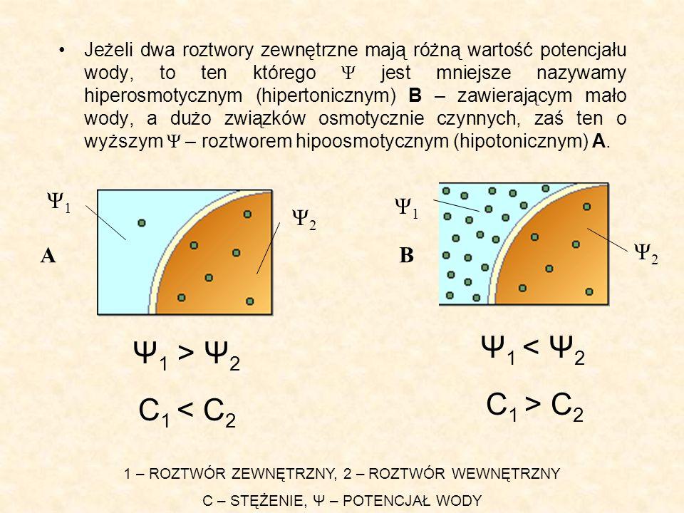 Jeżeli dwa roztwory zewnętrzne mają różną wartość potencjału wody, to ten którego Ψ jest mniejsze nazywamy hiperosmotycznym (hipertonicznym) B – zawierającym mało wody, a dużo związków osmotycznie czynnych, zaś ten o wyższym Ψ – roztworem hipoosmotycznym (hipotonicznym) A.