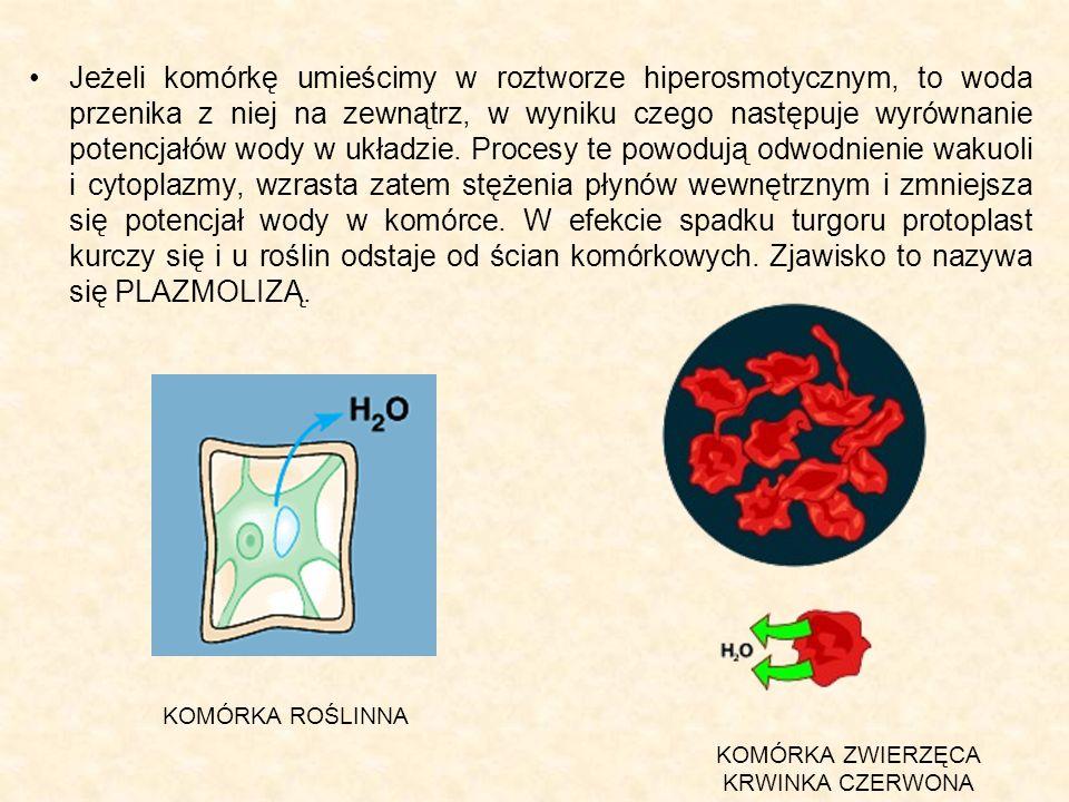 Jeżeli komórkę umieścimy w roztworze hiperosmotycznym, to woda przenika z niej na zewnątrz, w wyniku czego następuje wyrównanie potencjałów wody w ukł