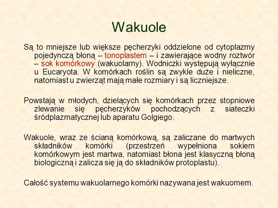 Wakuole Są to mniejsze lub większe pęcherzyki oddzielone od cytoplazmy pojedynczą błoną – tonoplastem – i zawierające wodny roztwór – sok komórkowy (wakuolarny).
