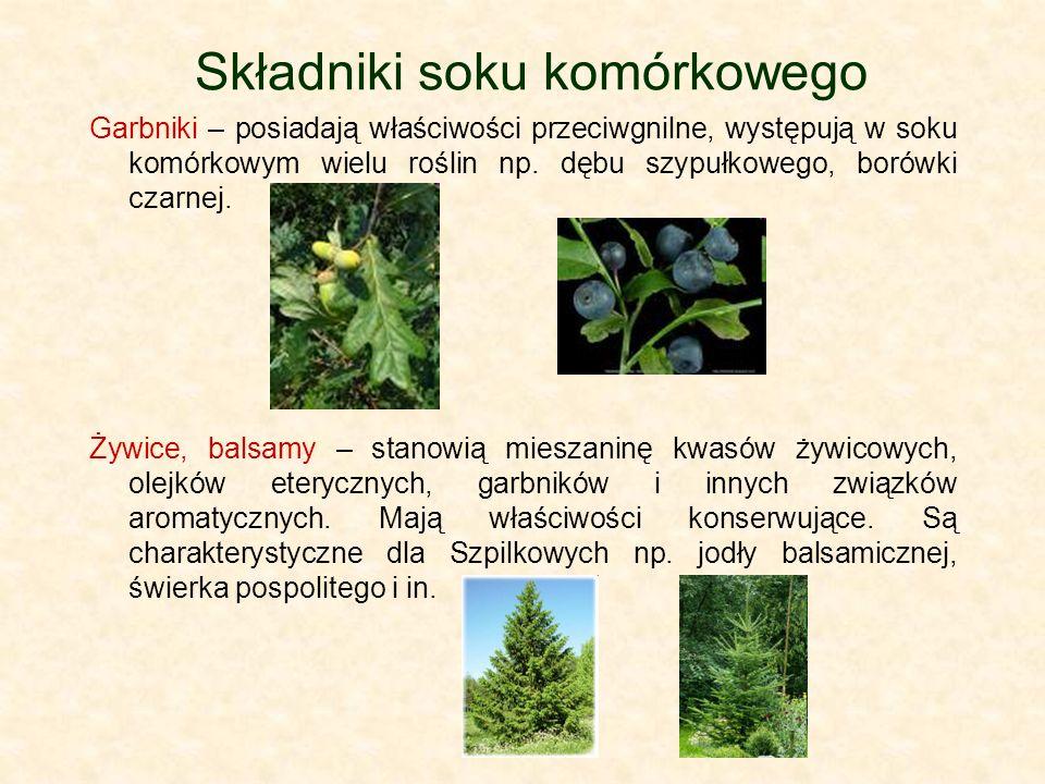 Składniki soku komórkowego Garbniki – posiadają właściwości przeciwgnilne, występują w soku komórkowym wielu roślin np. dębu szypułkowego, borówki cza