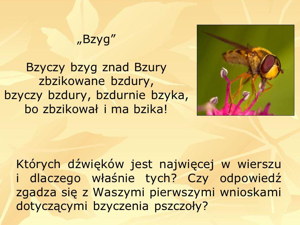 Bzyg Bzyczy bzyg znad Bzury zbzikowane bzdury, bzyczy bzdury, bzdurnie bzyka, bo zbzikował i ma bzika! Których dźwięków jest najwięcej w wierszu i dla