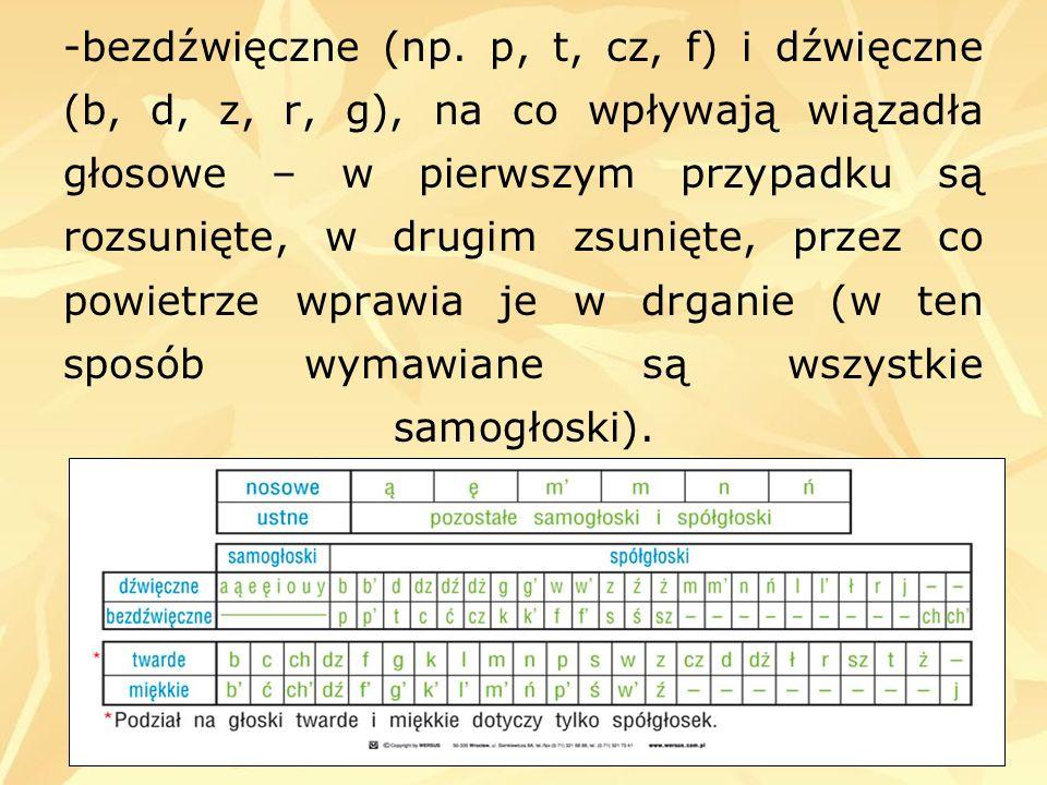 -bezdźwięczne (np. p, t, cz, f) i dźwięczne (b, d, z, r, g), na co wpływają wiązadła głosowe – w pierwszym przypadku są rozsunięte, w drugim zsunięte,