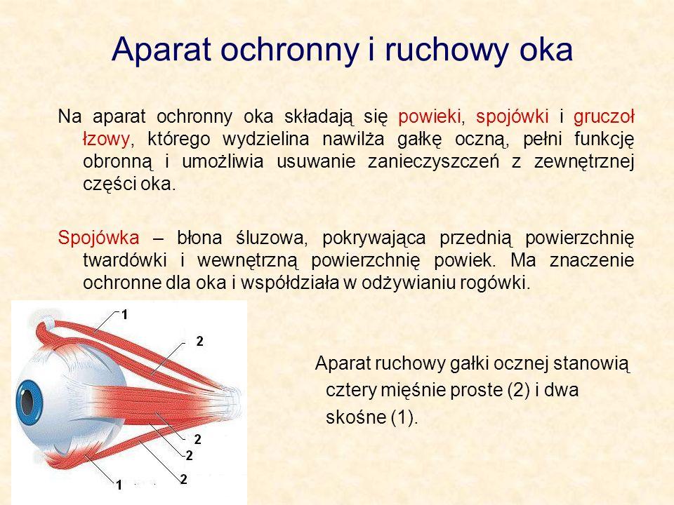 Aparat ochronny i ruchowy oka Na aparat ochronny oka składają się powieki, spojówki i gruczoł łzowy, którego wydzielina nawilża gałkę oczną, pełni fun
