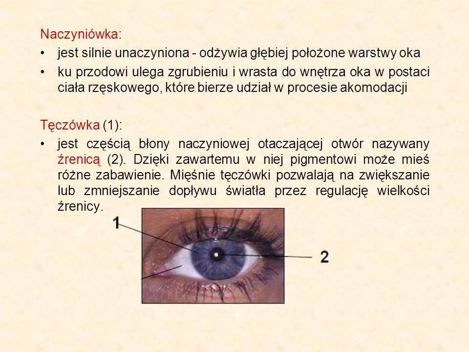 Naczyniówka: jest silnie unaczyniona - odżywia głębiej położone warstwy oka ku przodowi ulega zgrubieniu i wrasta do wnętrza oka w postaci ciała rzęsk
