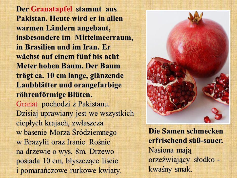 Der Granatapfel stammt aus Pakistan. Heute wird er in allen warmen Ländern angebaut, insbesondere im Mittelmeerraum, in Brasilien und im Iran. Er wäch