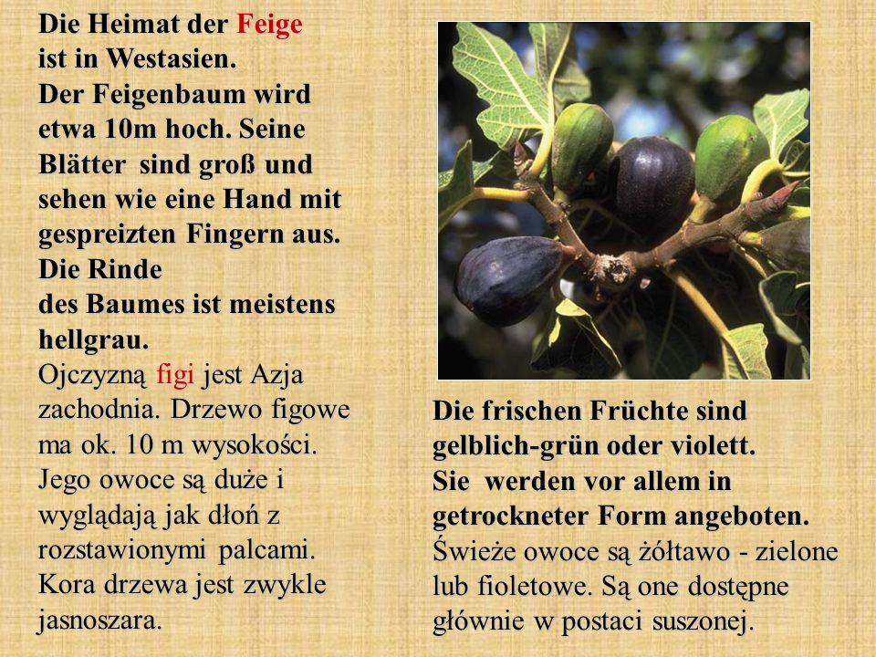 Die Heimat der Feige ist in Westasien. Der Feigenbaum wird etwa 10m hoch. Seine Blätter sind groß und sehen wie eine Hand mit gespreizten Fingern aus.