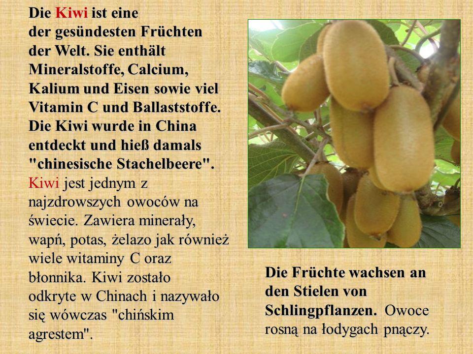 Die Kiwi ist eine der gesündesten Früchten der Welt. Sie enthält Mineralstoffe, Calcium, Kalium und Eisen sowie viel Vitamin C und Ballaststoffe. Die