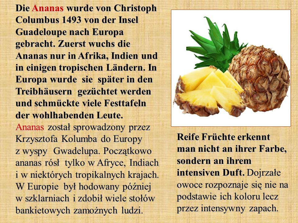 Die Ananas wurde von Christoph Columbus 1493 von der Insel Guadeloupe nach Europa gebracht. Zuerst wuchs die Ananas nur in Afrika, Indien und in einig