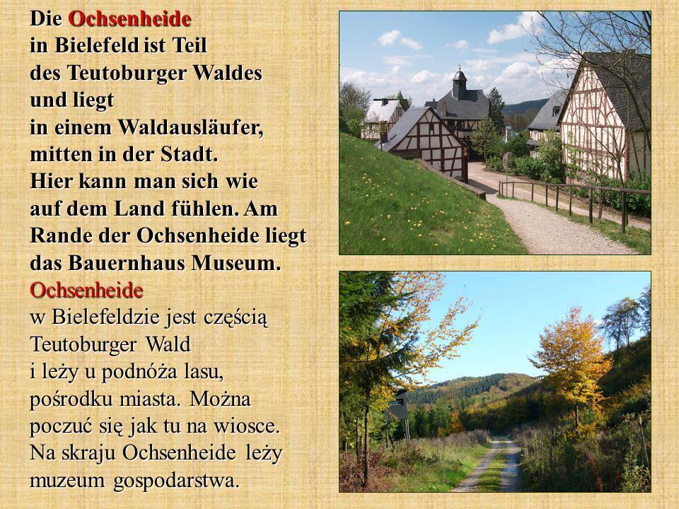 Die Ochsenheide in Bielefeld ist Teil des Teutoburger Waldes und liegt in einem Waldausläufer, mitten in der Stadt.