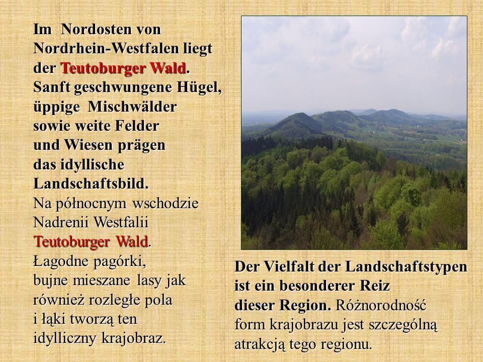 Im Nordosten von Nordrhein-Westfalen liegt der Teutoburger Wald.