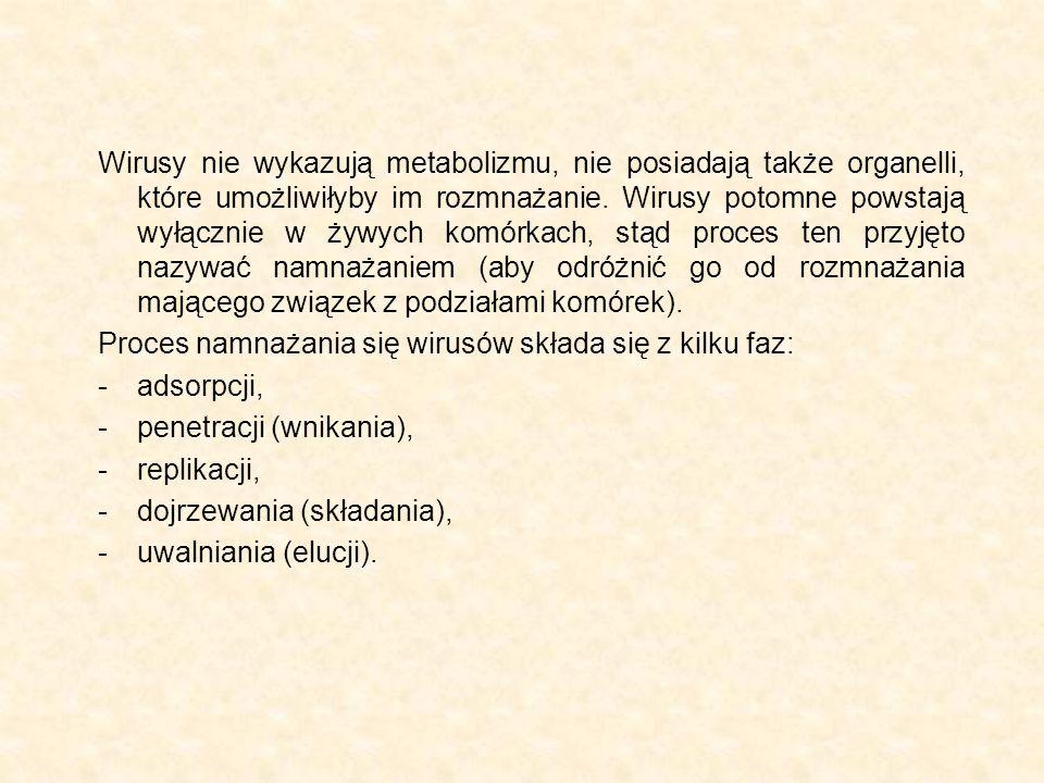 Wirusy nie wykazują metabolizmu, nie posiadają także organelli, które umożliwiłyby im rozmnażanie. Wirusy potomne powstają wyłącznie w żywych komórkac