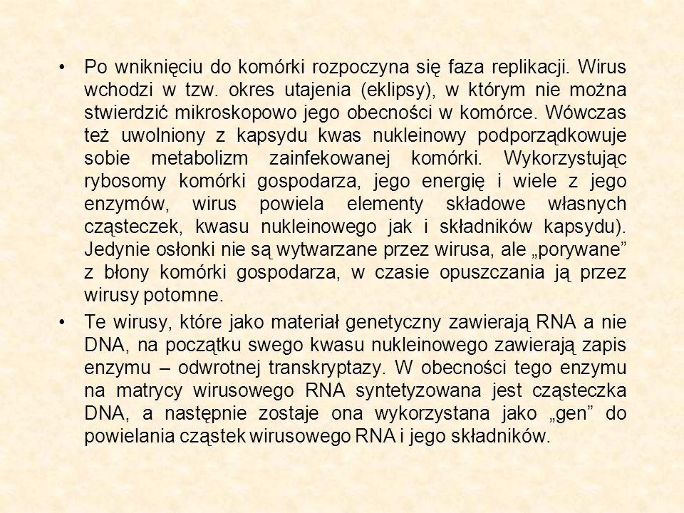 Po wniknięciu do komórki rozpoczyna się faza replikacji. Wirus wchodzi w tzw. okres utajenia (eklipsy), w którym nie można stwierdzić mikroskopowo jeg