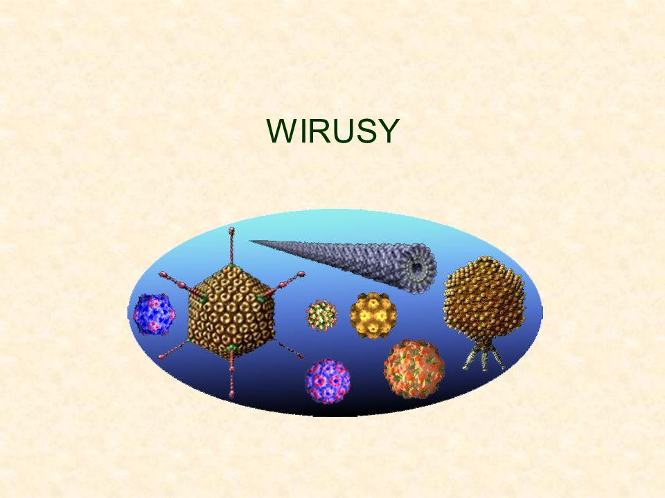 Pierwszy etap zakażania jest nieco odmienny w przypadku bakteriofagów.