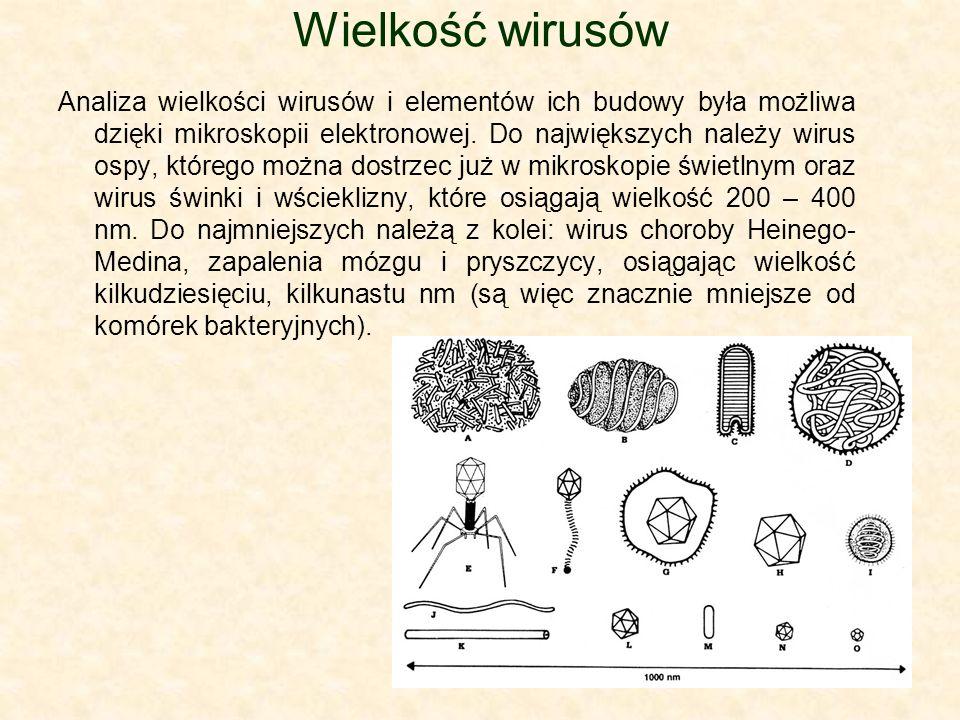Wielkość wirusów Analiza wielkości wirusów i elementów ich budowy była możliwa dzięki mikroskopii elektronowej. Do największych należy wirus ospy, któ