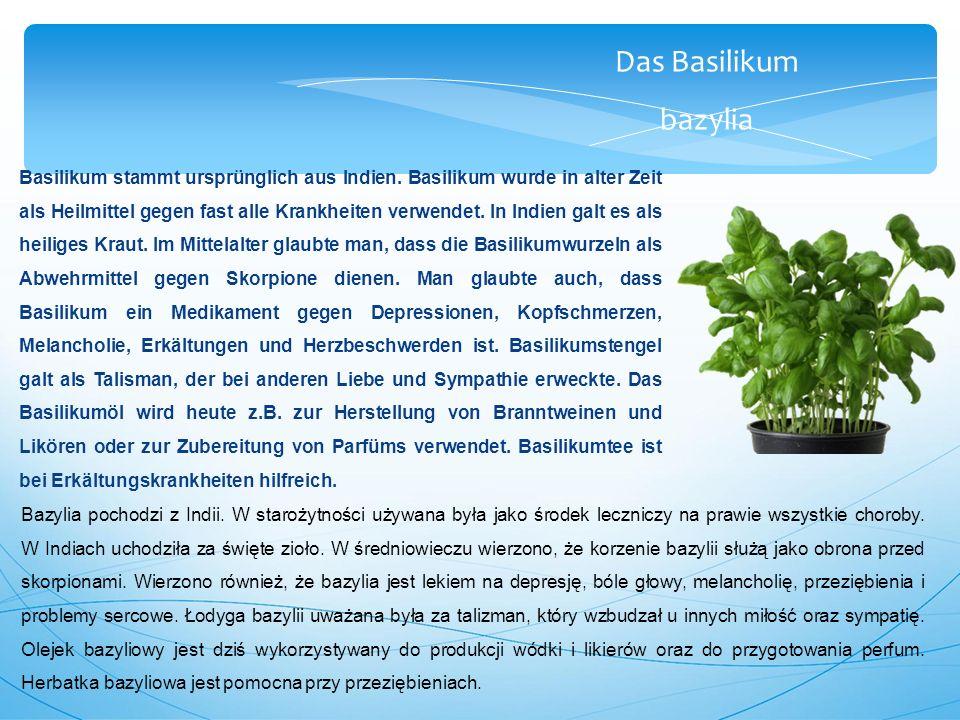 Das Basilikum bazylia Basilikum stammt ursprünglich aus Indien.