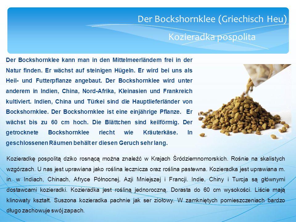 Der Bockshornklee (Griechisch Heu) Kozieradka pospolita Der Bockshornklee kann man in den Mittelmeerländern frei in der Natur finden.