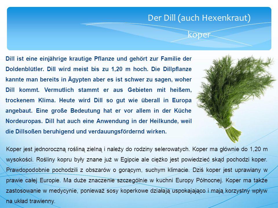 Der Dill (auch Hexenkraut) koper Dill ist eine einjährige krautige Pflanze und gehört zur Familie der Doldenblütler.