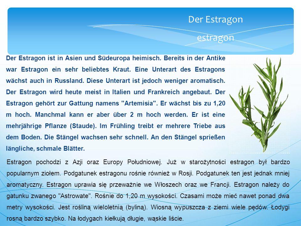Der Estragon estragon Der Estragon ist in Asien und Südeuropa heimisch.